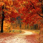 colorful trees in fall