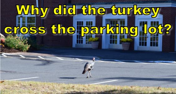 Why did the turkey cross the parking lot?